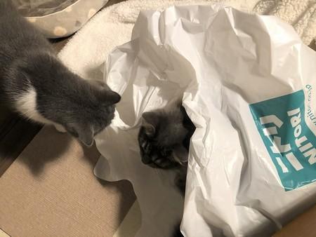 ニトリの袋で遊ぶ猫