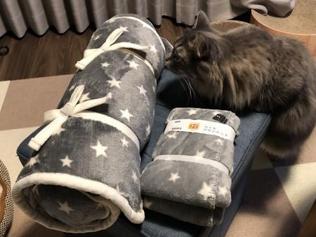 ブランケットと戯れる猫