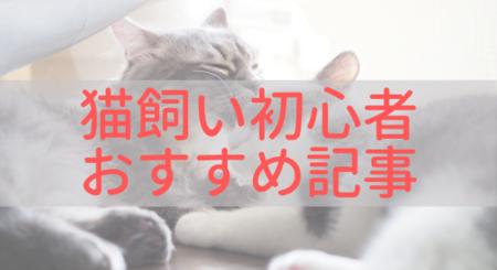 猫飼い初心者におすすめ記事