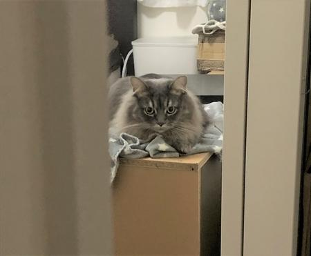 Nウォームで寝る猫