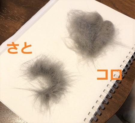 ブラッシング後のネコの毛