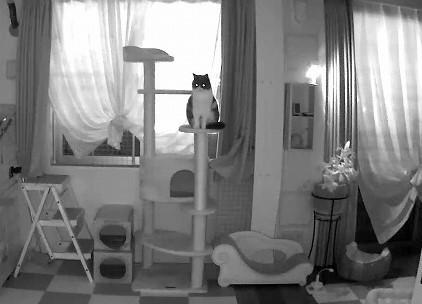 闇夜に光る猫の目