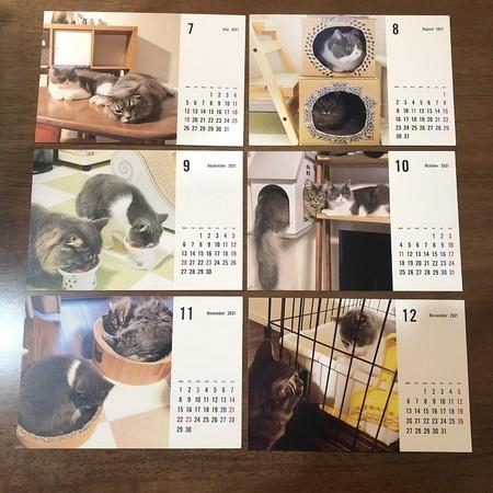 猫カレンダー7~12月