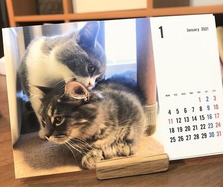 TOLOTオリジナルカレンダー