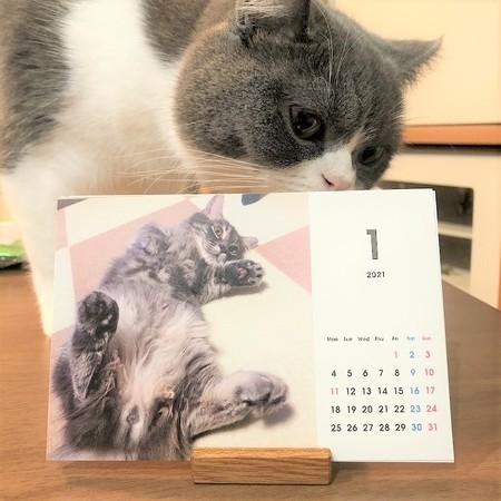 オリジナルカレンダーを覗く猫