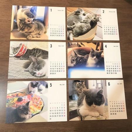 猫カレンダー1~6月