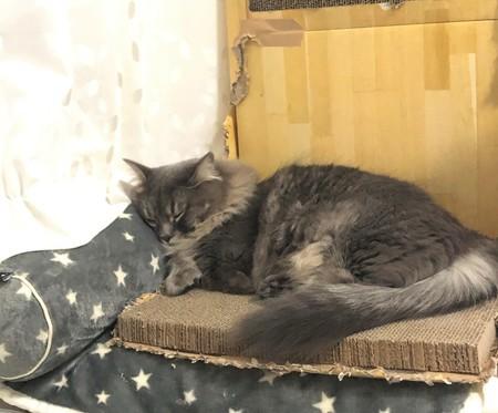 爪とぎで寝る猫