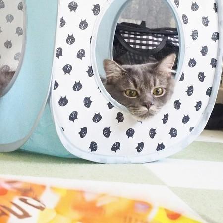キャットテントで寝る猫