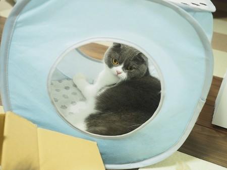キャットテントに隠れる猫