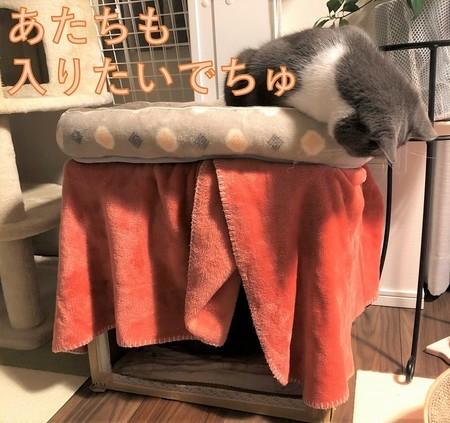 猫炬燵段ボール