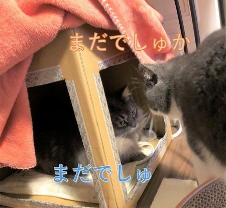 猫炬燵に入りたい猫