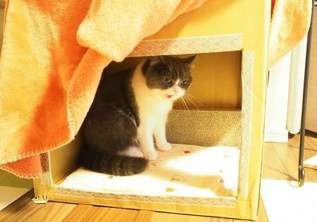 猫炬燵に入る猫