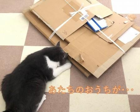 片付けられた段ボールと猫