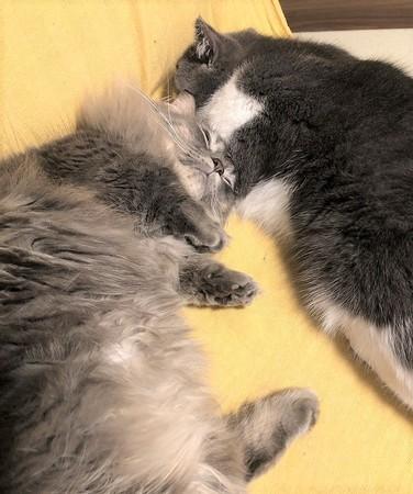 猫の寝落ち