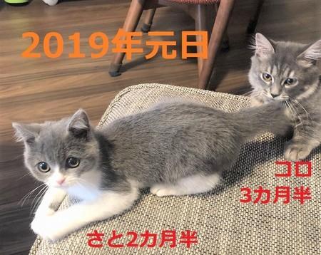 f:id:itsukorosato:20201213144616j:plain