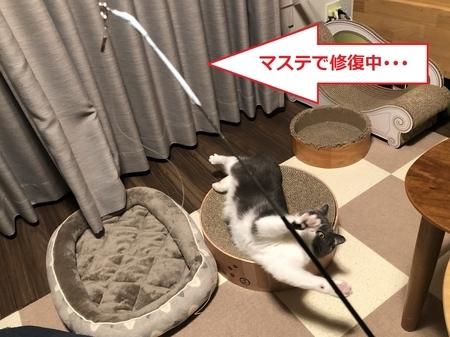 f:id:itsukorosato:20210106200521j:plain