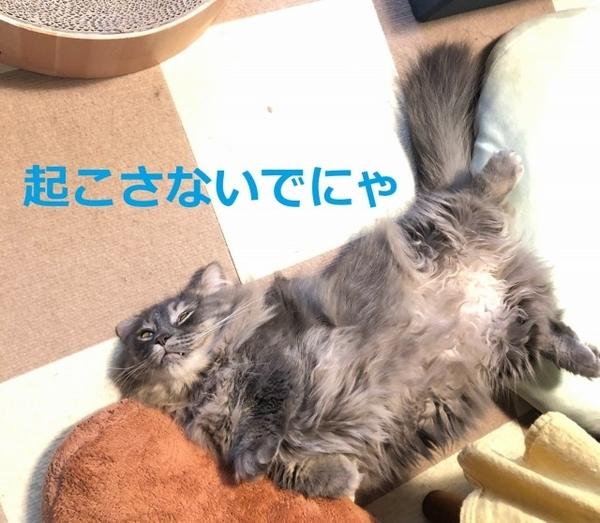 f:id:itsukorosato:20210112093439j:plain