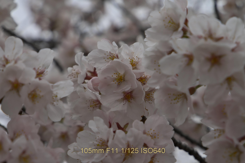 f:id:iwa_maru:20190403214547j:plain