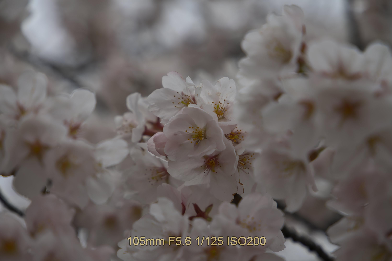 f:id:iwa_maru:20190403214554j:plain
