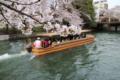 京都新聞写真コンテスト「疎水の春」