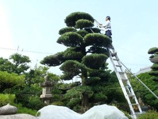 f:id:iwahashizouen:20110725215325j:image