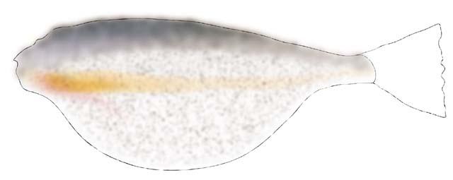 20080815101608