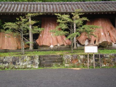 湯布院 宇奈岐日女神社(うなぐひめじんじゃ) きりかぶ