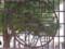 32 銀座線浅草駅の上屋にあるレリーフの模様(東京メトロ提供)