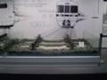 110316-57 リニア・鉄道館 狭軌