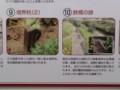 47-111030 「西尾鉄道と岡崎」展 遺跡 9、10