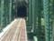 20140506 13.44.33 豊橋いきふつう - 小和田-大嵐間の鉄橋