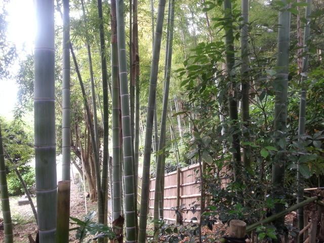 20150509_102949 竹採公園 - たけばやし