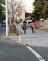 2016.12.9 豊橋 (16) けやきどおり 630-800