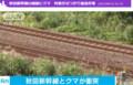 秋田新幹線でくま(テレ朝News - 2017.9.16 (1)