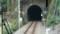 2018.1.11 みさくぼ (231) 豊橋いきふつう - トンネル(相月-佐久間間) 960