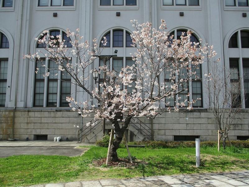 2019.3.18 (169) 大阪造幣局 - 外観 2000-1500