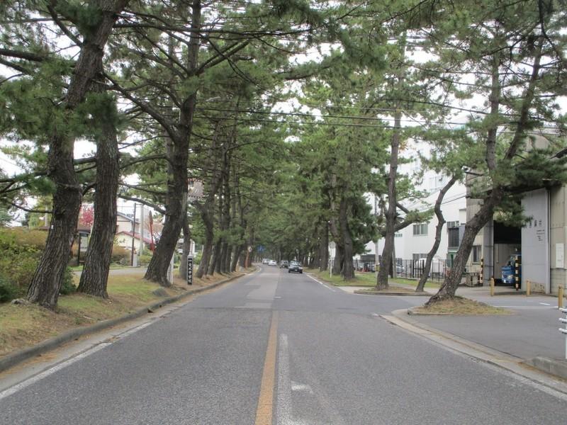 2019.11.13 (20) 東海道 - 新田北交差点からにしえ 2000-1500