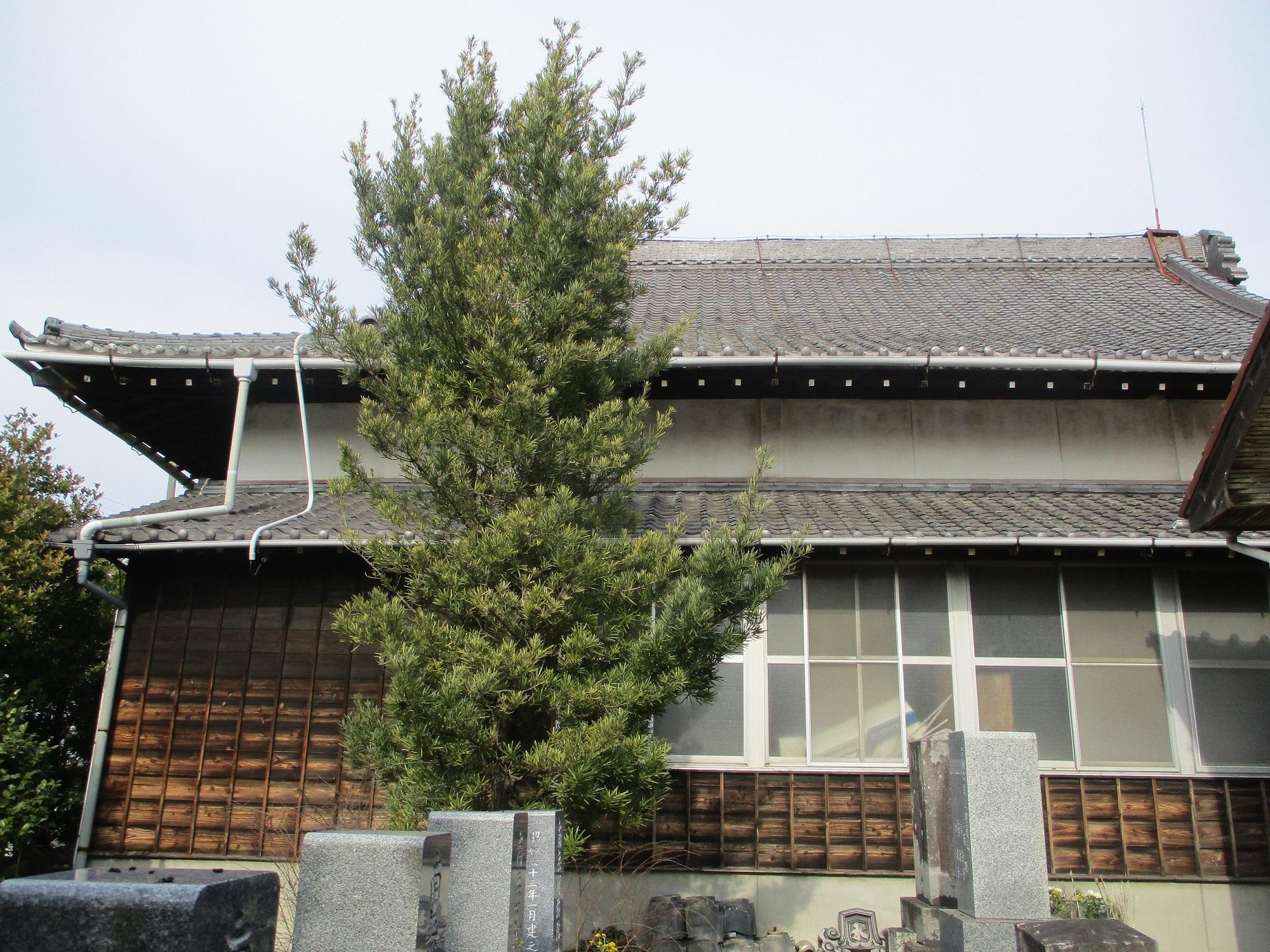 2020.2.3 (5) 城泉寺 - 本堂(みなみから) 2000-1500