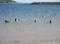 2020.3.24 (12) 三河湾 - 恵比寿海水浴場 2000-1460
