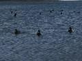 2020.3.24 14:39 三河湾 - 恵比寿海水浴場 800-600