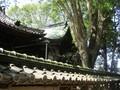 2020.5.17 (4) 柿碕和志取神社 - わたり殿と本殿 2000-1500