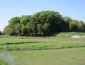 2020.5.17 (5) 柿碕町から小針町をみる 1560-1200