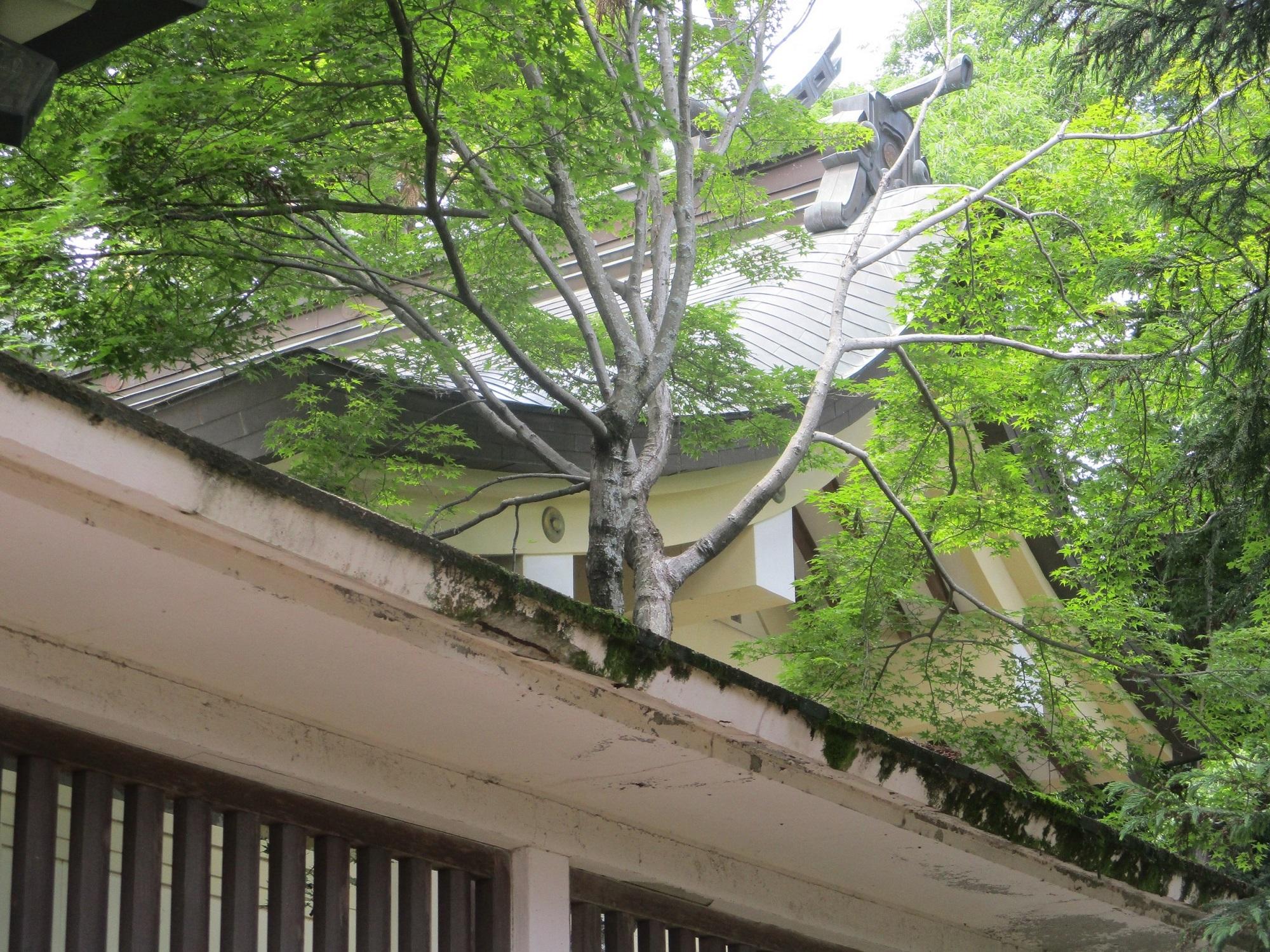 2020.5.27 (23) 鷲取神社 - 本殿 2000-1500