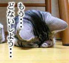 うつむく猫
