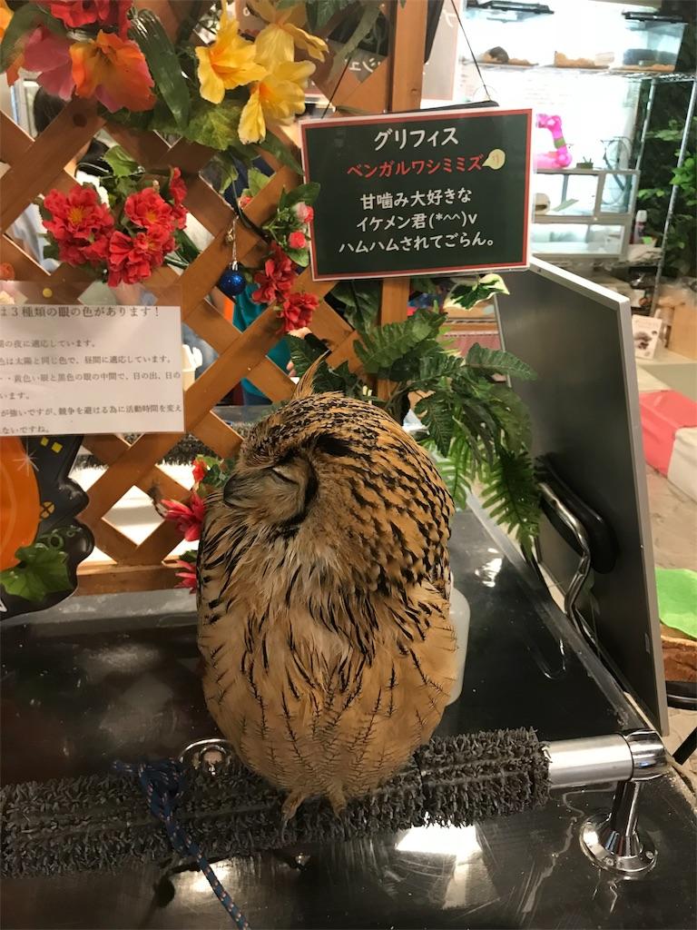 f:id:iwatako:20181008200635j:image