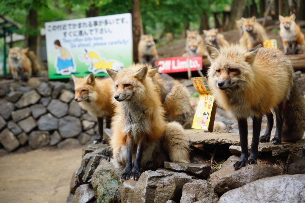 f:id:iwate-u_photo:20170615192555j:plain