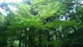 癒し  緑