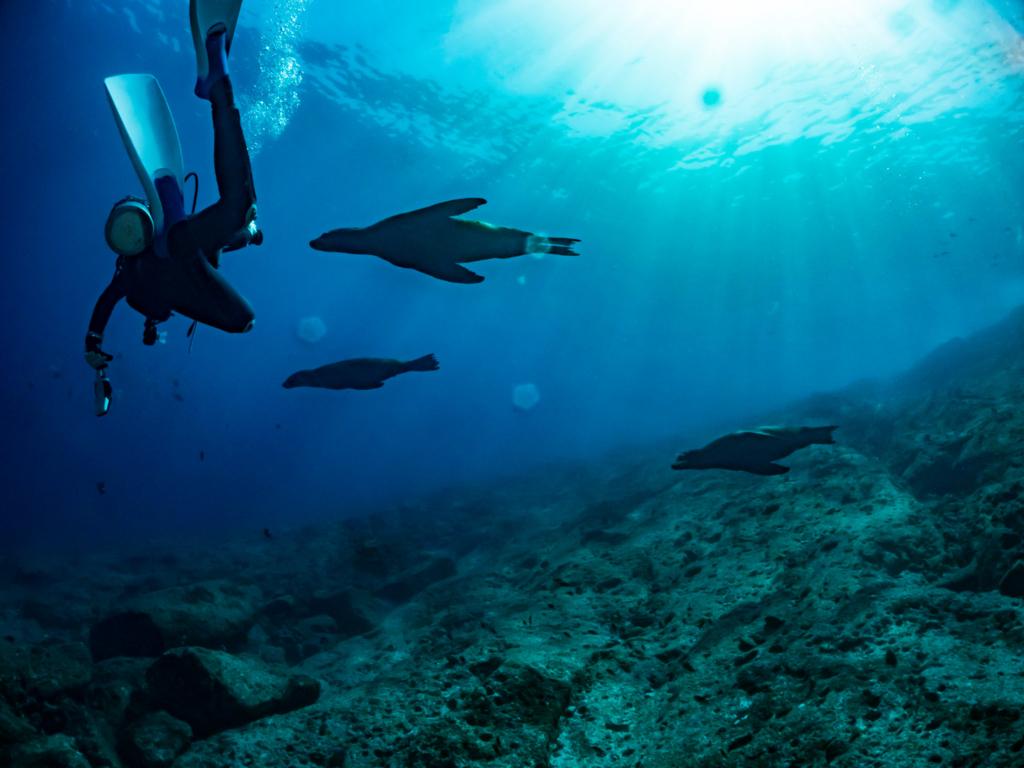イルカとダイビング