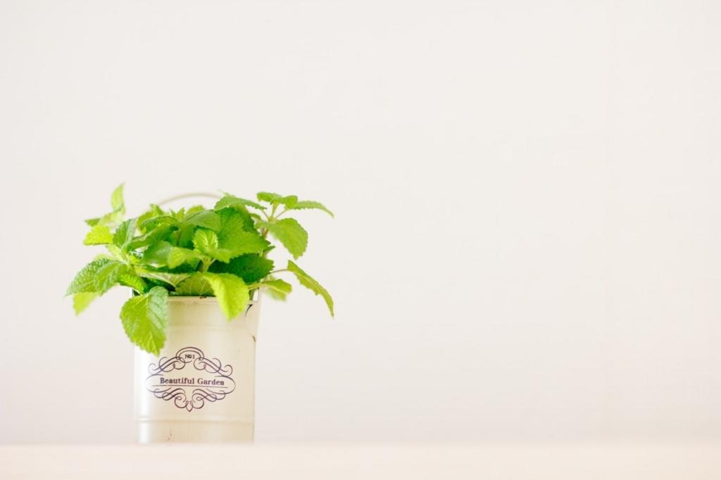 観葉植物として人気?のレモンハーブ