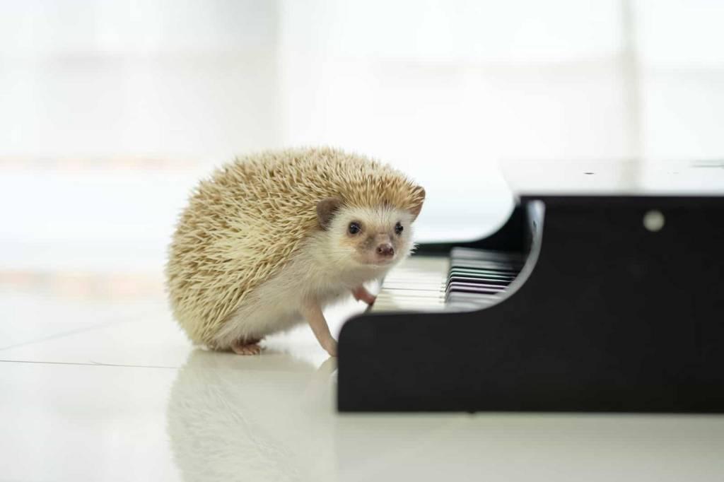 音楽を楽しむハリネズミ